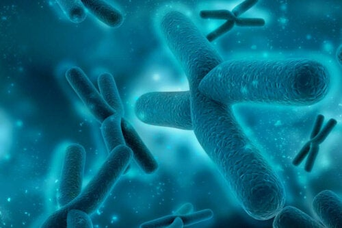 Kromosomer.