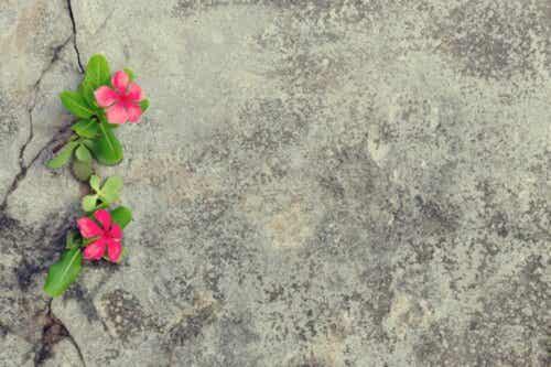 Blomster på fortau.