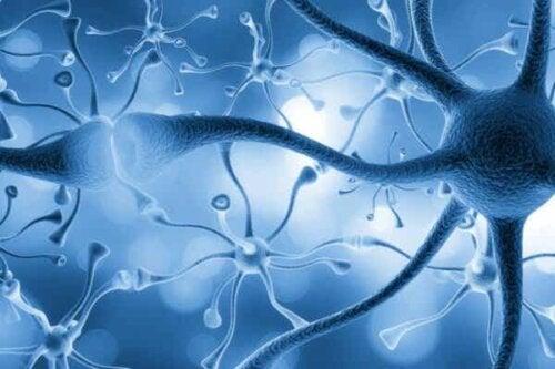 Flere sammenkoblede nevroner.