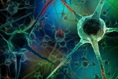 Har du hørt om disse nevrondrepende vanene?