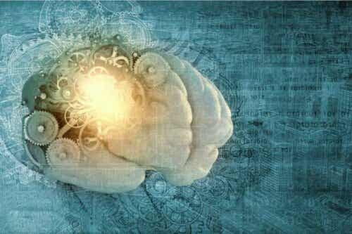 Hva er metahukommelse og hukommelse?
