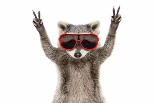 Et dyr med solbriller.