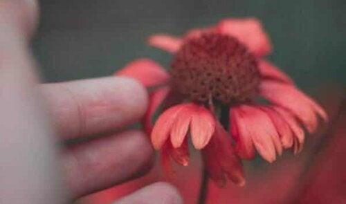 En blomst.