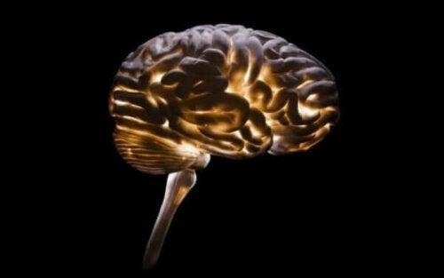 Nevrokriminologi, forståelsen av kriminalitet