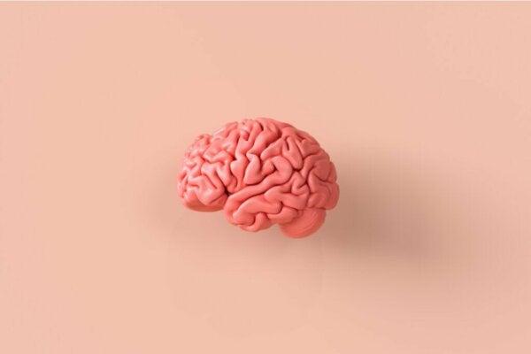 Nevroetikk, et fascinerende blikk på hjernen og moralsk atferd