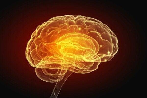 Egoistisk og sjenerøs atferd endrer måten hjernen fungerer på