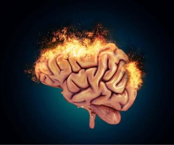 Nevrobiologien bak aggressiv atferd