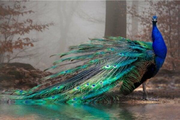 11 av de vakreste dyrene i verden