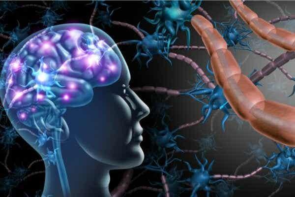 Forskjellene mellom multippel sklerose og ALS