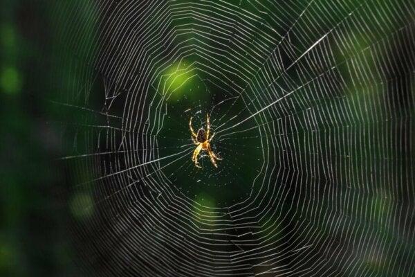 Hva betyr det når du drømmer om edderkopper?