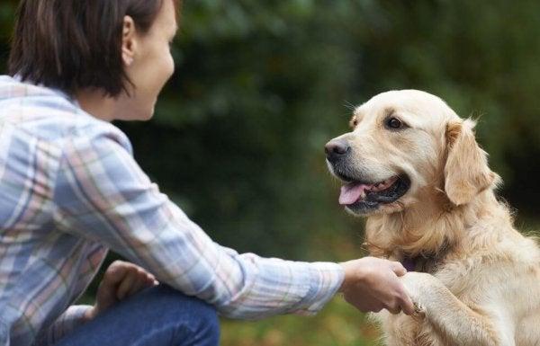 Hvordan gjenkjenner hunder ansikter?